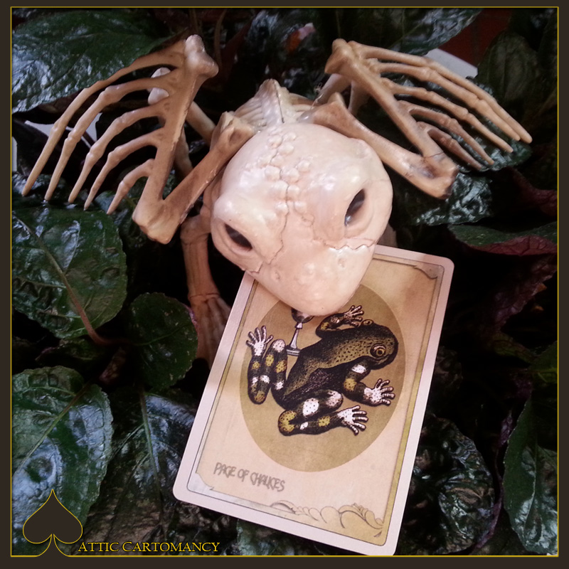 Card of the Day: The Page of Chalices from the Black Ibis Tarot